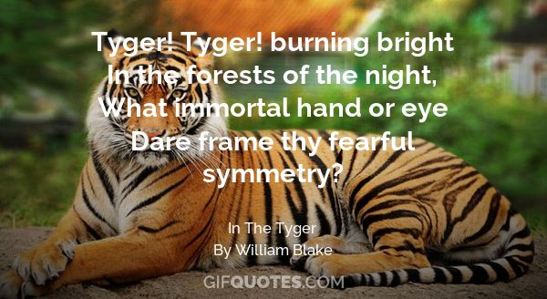 It's International Tiger Day Save The Tigers Before It's Too Late Cool Tiger Quotes