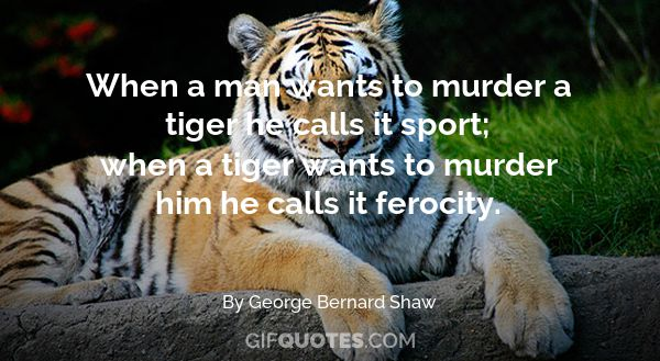 Tiger Quotes Cool It's International Tiger Day Save The Tigers Before It's Too Late